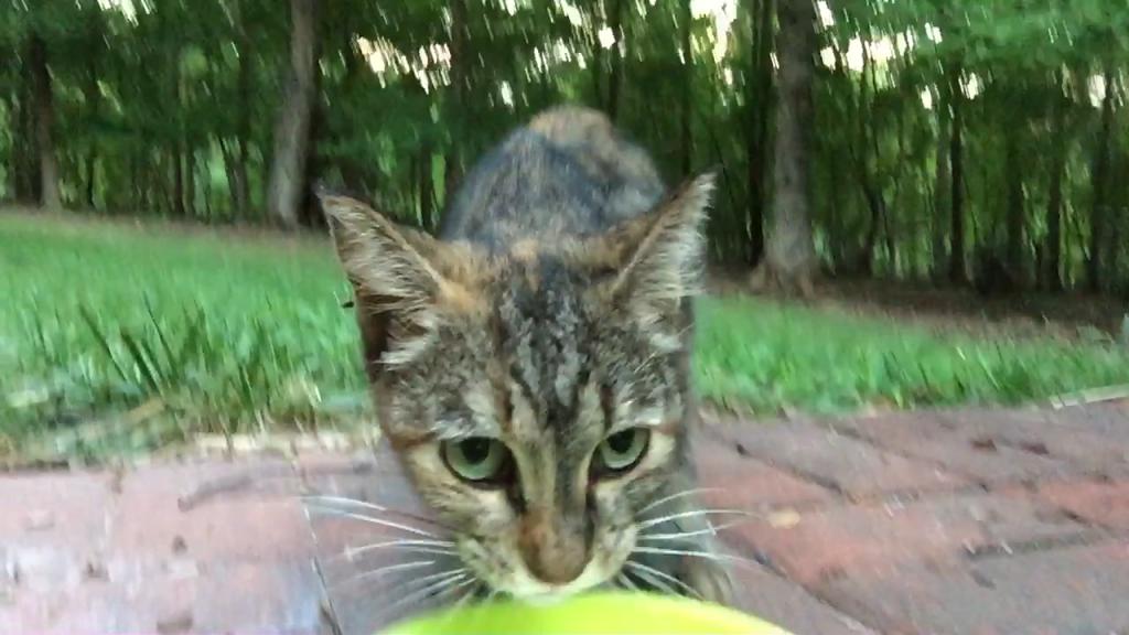 """""""Yum"""""""